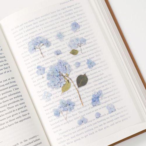 Hydrangea Pressed Flower Sticker