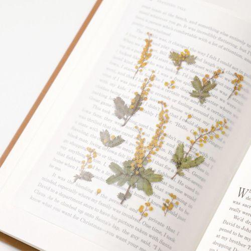 Mimosa Pressed Flower Sticker