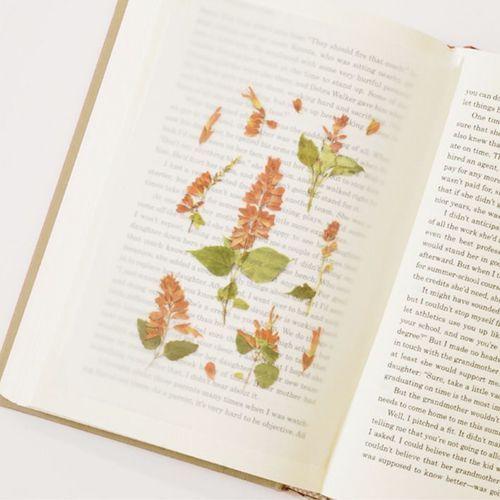 Salvia Pressed Flower Sticker
