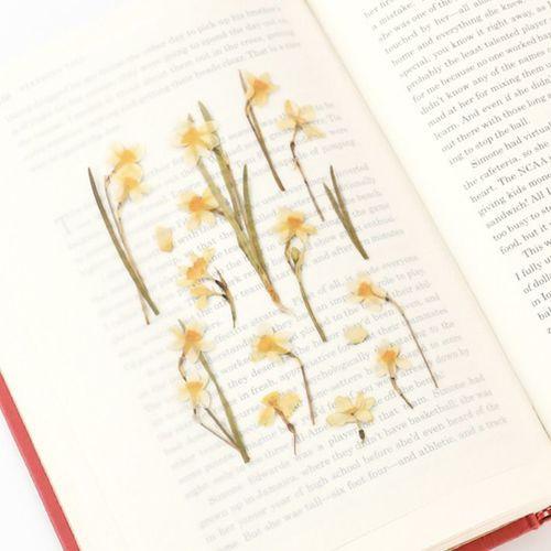 Narcissus Pressed Flower Sticker