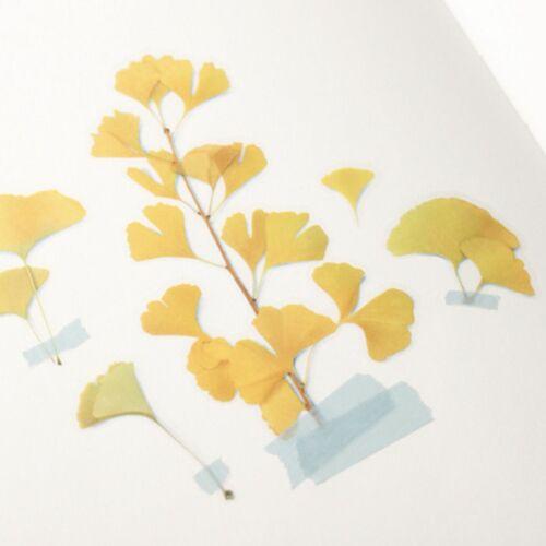 Ginkgo Pressed Flower Sticker