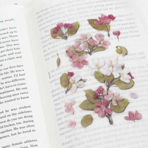Apple Blossom Pressed Flower Sticker