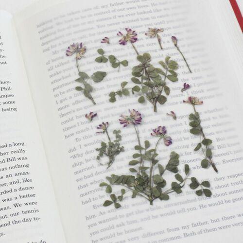 Astragalus Sinicus Pressed Flower Sticker
