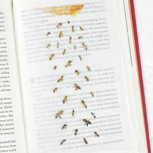 Honey Bee Nature Sticker