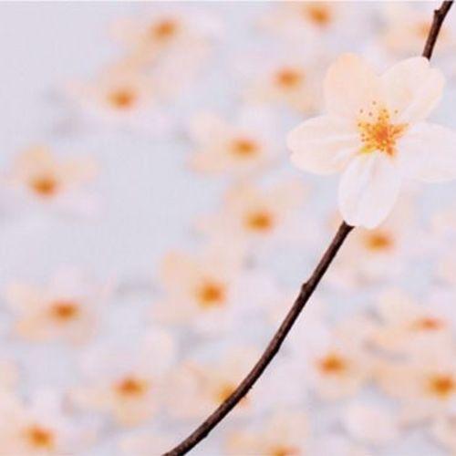 Medium Cherry Blossom Sticky Note