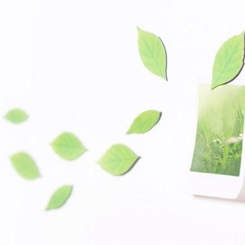 Leaf Magnet Set