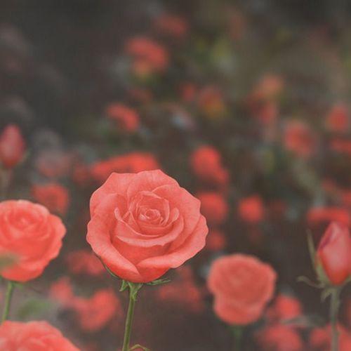 Large Rose Sticky Note