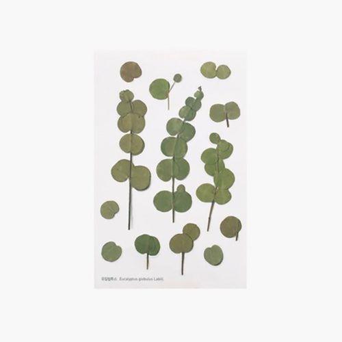 Eucalyptus Pressed Flower Sticker