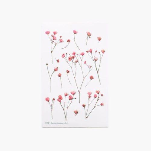 Gypsophila Pressed Flower Sticker