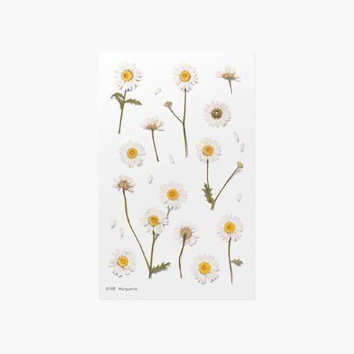 Marguerite Pressed Flower Sticker