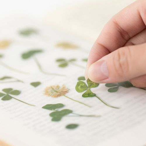 Four-leaf Clover Pressed Flower Sticker