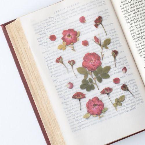 Mini Rose Pressed Flower Sticker