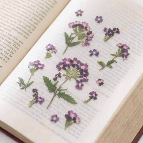 Verbena Pressed Flower Sticker
