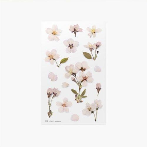 Cherry Blossom Pressed Flower Sticker