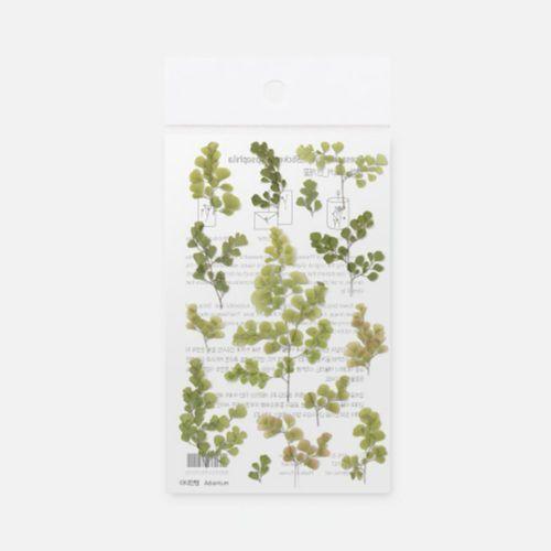 Adiantum Pressed Flower Sticker