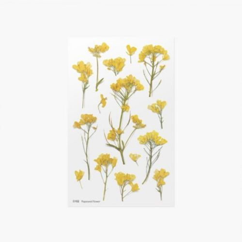 Rapeseed Pressed Flower Sticker